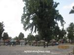 Borobudur1 (3)